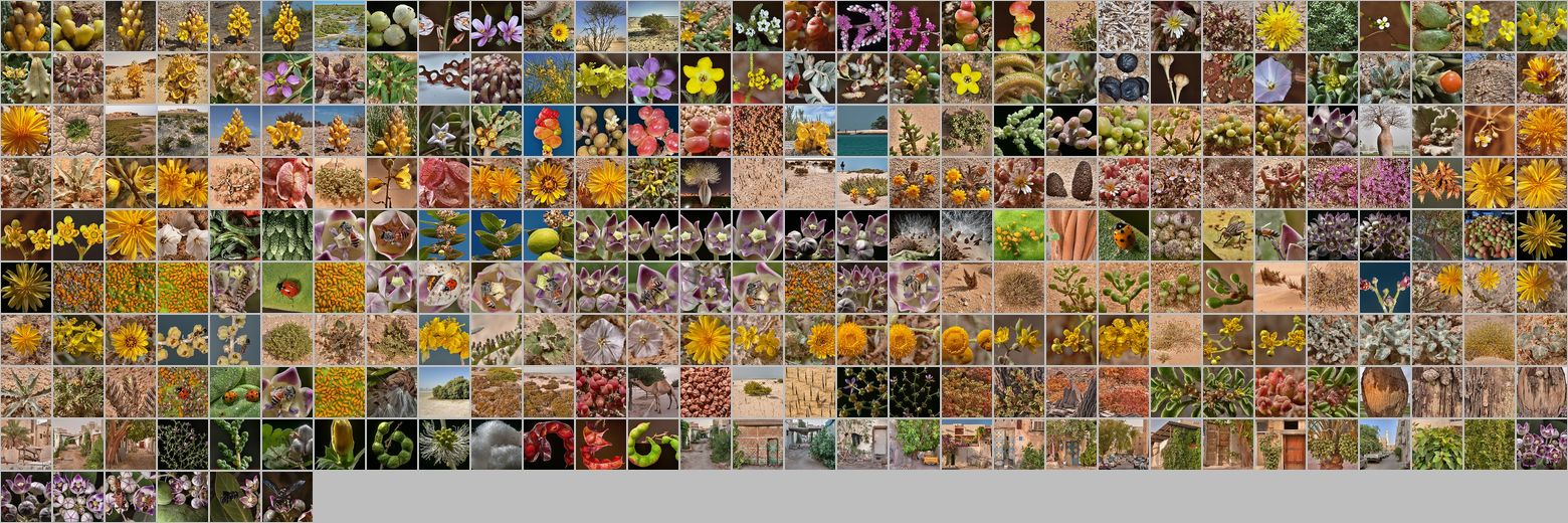 Photomontage of pictures of plants in Qatar. Years 2010 - 2013